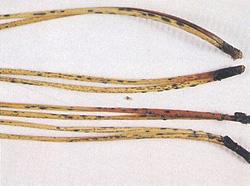 病落葉上の黒色、楕円形の菌体(子のう盤)